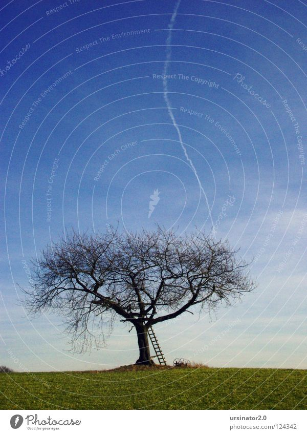 The tree 3 Tree Badlands Dark Field Green Ladder Old Old fashioned Airplane Vapor trail Sky Blue Clouds White Loneliness Far-off places Cold Land Feature