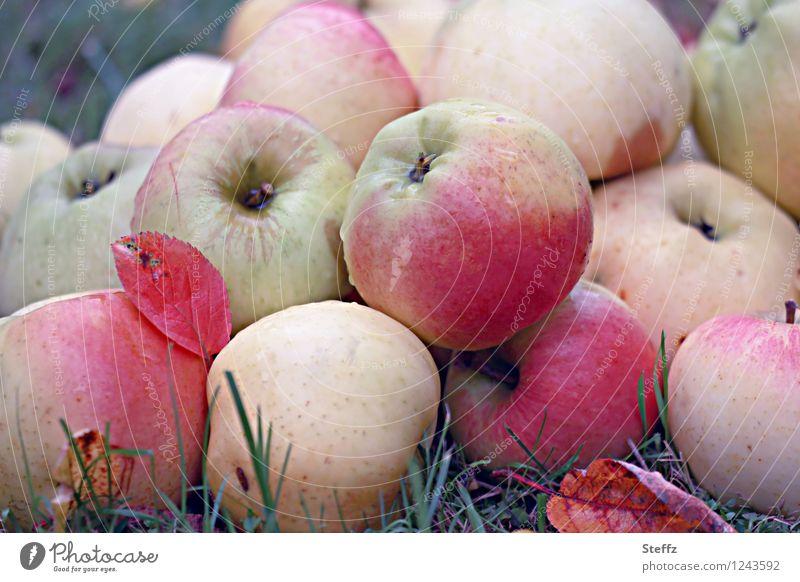 Apple harvest in autumn garden apples organic Organic fruit Fruit garden Supply Winter stock Vegan diet Vegetarian diet Nature Autumn Autumnal colours Garden