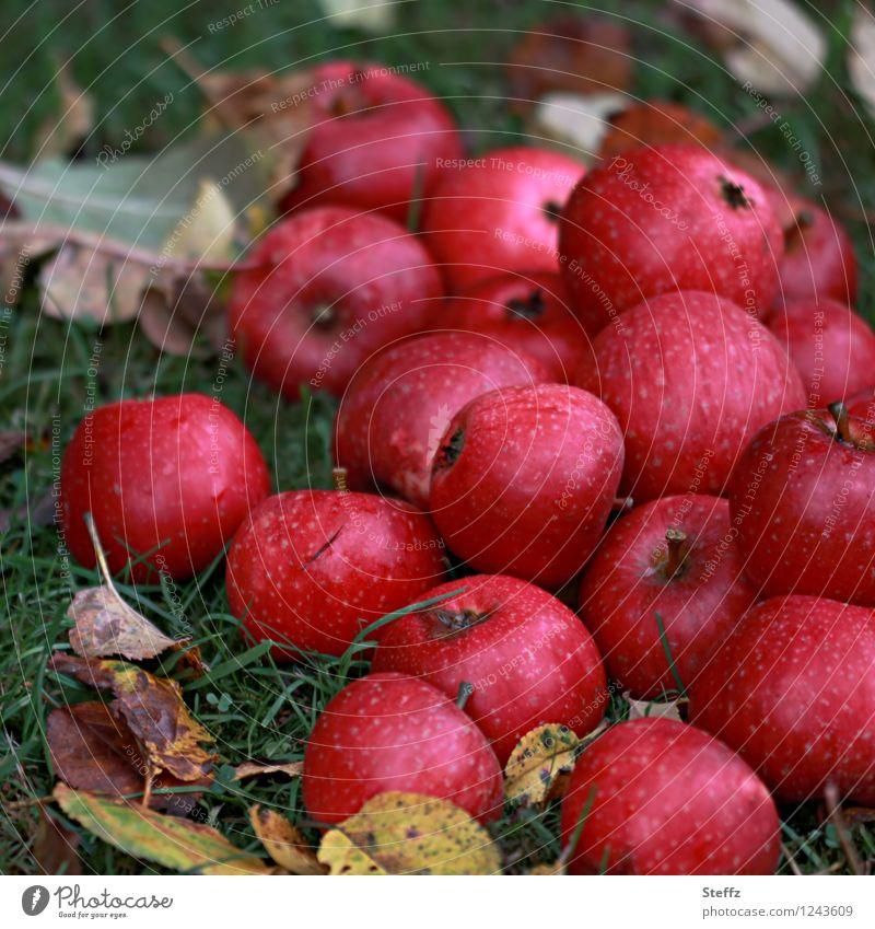 a winter supply of apples Apple Apple harvest red apples fruit harvest Windfall Supply harvest season Garden fruit Winter stock October October Light