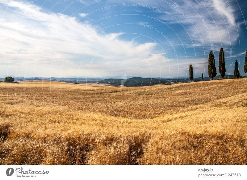Sky Nature Vacation & Travel Blue Summer Landscape Clouds Healthy Eating Environment Yellow Health care Horizon Field Climate Beautiful weather Italy