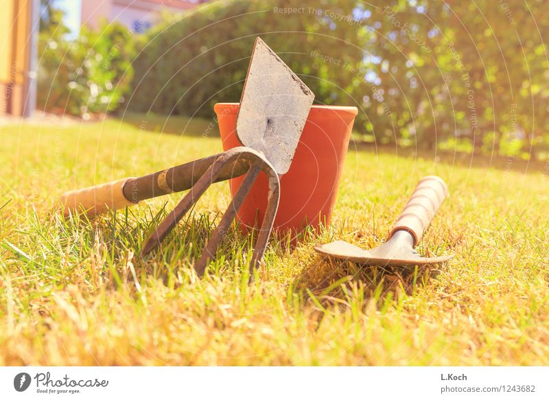 gardening Leisure and hobbies Summer Garden Gardening Services Craft (trade) Retirement Closing time Tool Shovel Grass Bushes Park Meadow Lawn blade of grass