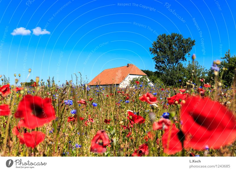 Sky Vacation & Travel Plant Summer Tree Flower Landscape Clouds House (Residential Structure) Grass Natural Building Garden Flat (apartment) Field