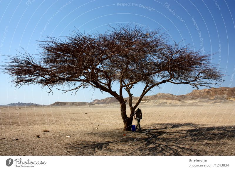 dry tree in the desert Nature Landscape Plant Sand Sky Cloudless sky Sun Summer Beautiful weather Tree Desert Stone Wood Adventure Concern Environment