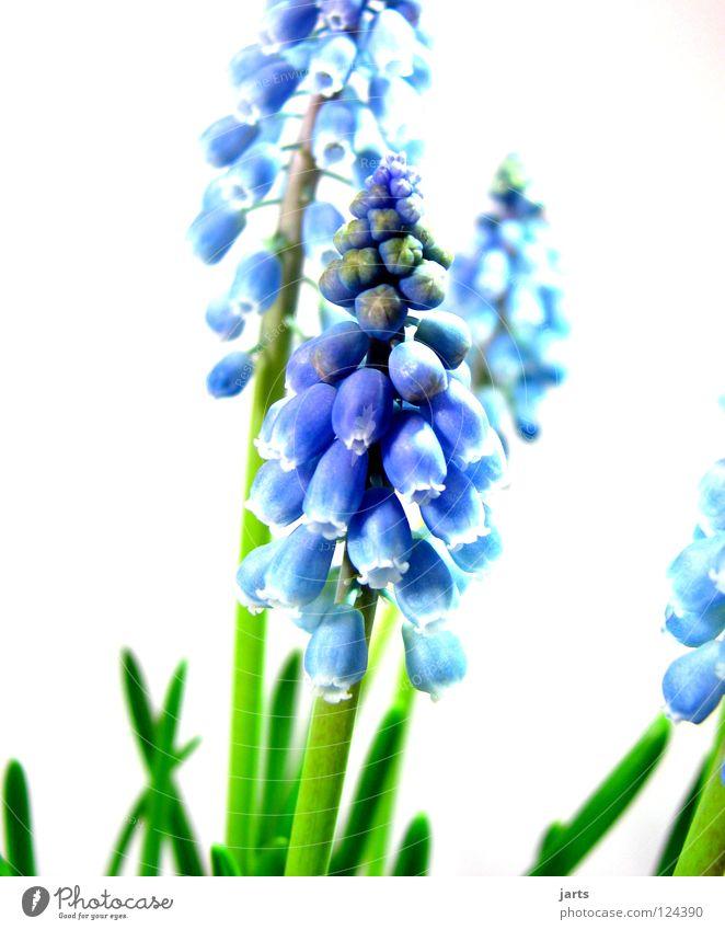 in blue Green Blossom Flower Spring Blue jarts