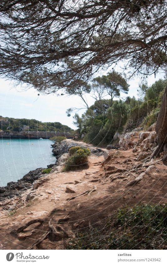 Cala Sa Nau Relaxation Swimming & Bathing Vacation & Travel Beach Nature Tree Rock Bay Lanes & trails Calm Majorca Mediterranean Float in the water Stone pine