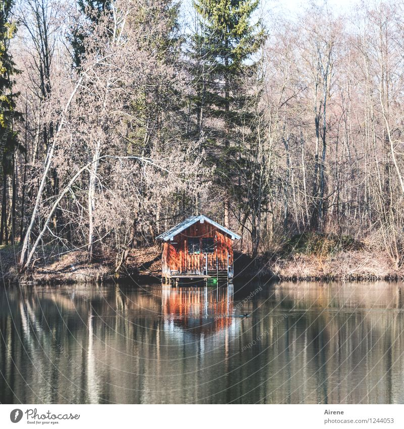 when everything becomes too much again... Forest Lakeside Pond Hut Barn Boathouse Old Positive Brown Orange Red To console Relaxation Calm Loneliness