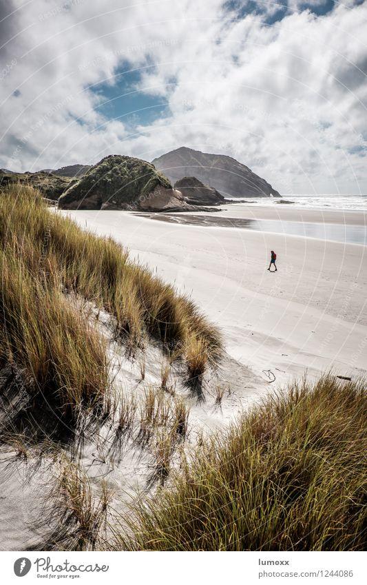 a day at the beach Nature Sand Water Clouds Summer Grass Coast Beach Bay Ocean Pacific Ocean Island New Zealand Beach dune Marram grass Discover Blue Brown