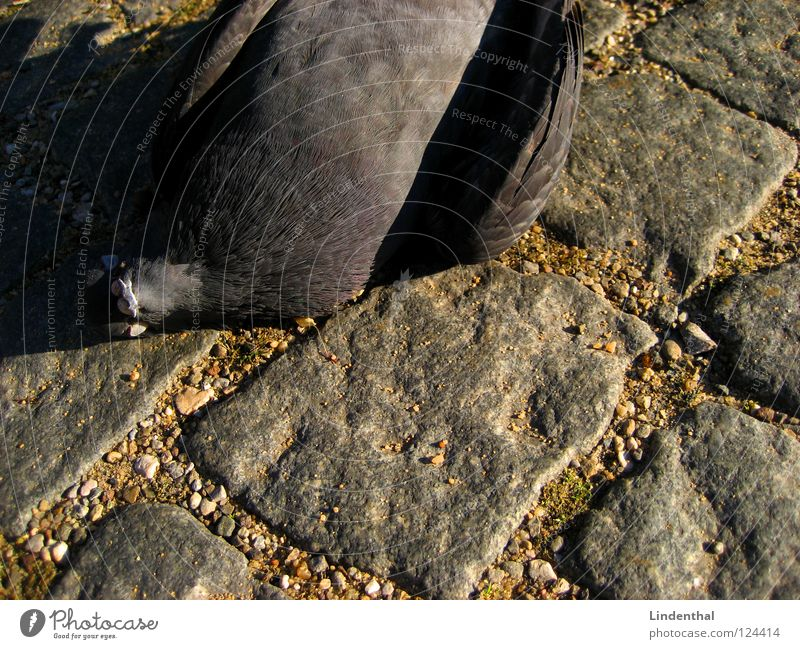 Sky Animal Street Death Stone Bird Flying Fresh Pigeon Hell Gully Paving stone Sewer Drainage