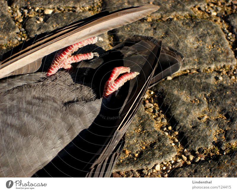 Sky Animal Street Death Stone Bird Flying Fresh Pigeon Hell Gully Paving stone Sewer