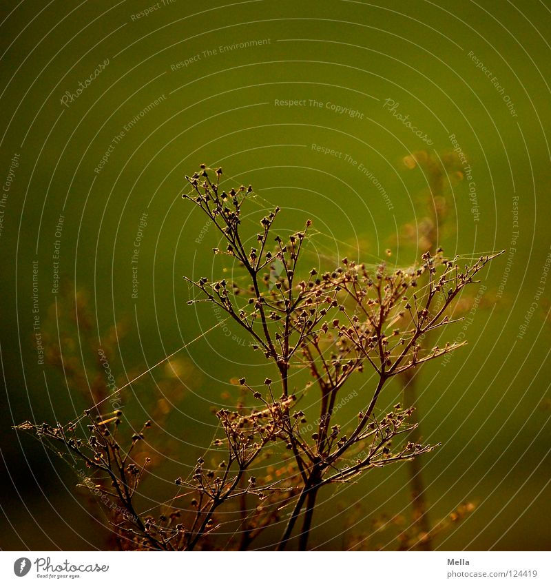 spun Plant Blossom Spider Dry Back-light Sunlight Lighting Green Afternoon Meadow Flower Field Physics Death Past Transience Park risp spiderweb spun in Dried