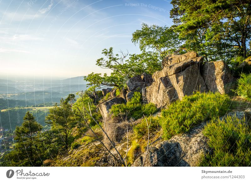 lute rock Environment Nature Landscape Plant Animal Sun Sunrise Sunset Sunlight Spring Summer Climate Climate change Weather Beautiful weather Warmth Tree