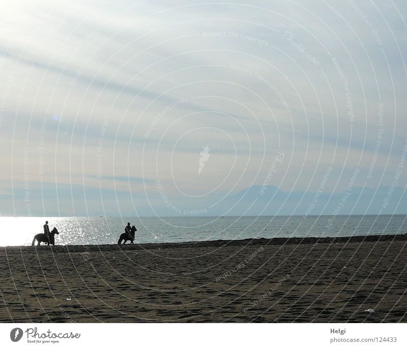 Ride on the beach II Dream Horse Tails Hand Horse's gait Beach Coast Ocean Lake Sea water Clouds Sun Back-light Vacation & Travel Relaxation Leisure and hobbies