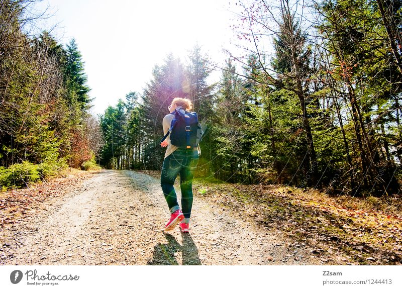 walk in the woods Lifestyle Vacation & Travel Trip Summer Hiking Feminine Young woman Youth (Young adults) 18 - 30 years Adults Nature Landscape Sun Autumn