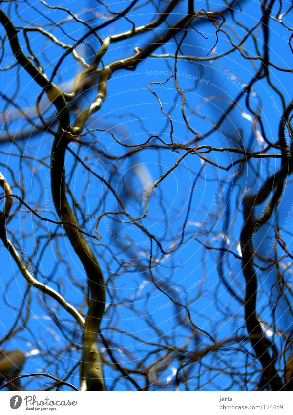 ramified Tree Untidy Branched Park Pasture Sky Blue Arrangement jarts
