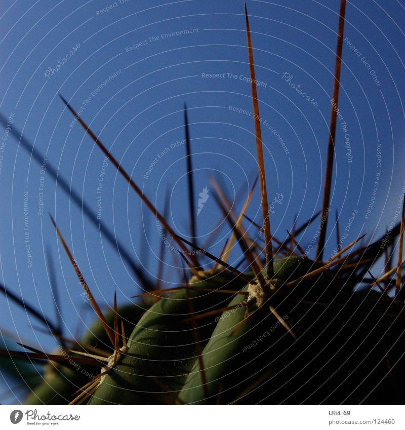Plant Desert Cactus Thorn Thorny Desert plant