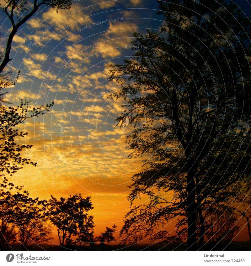 el atardecer de oro Silhouette Sunset Shadow Blue Orange Gold Sky
