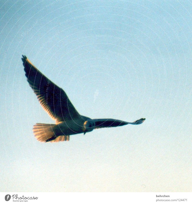 Sky Ocean Blue Beach Freedom Bird Coast Flying Feather Wing Baltic Sea Seagull