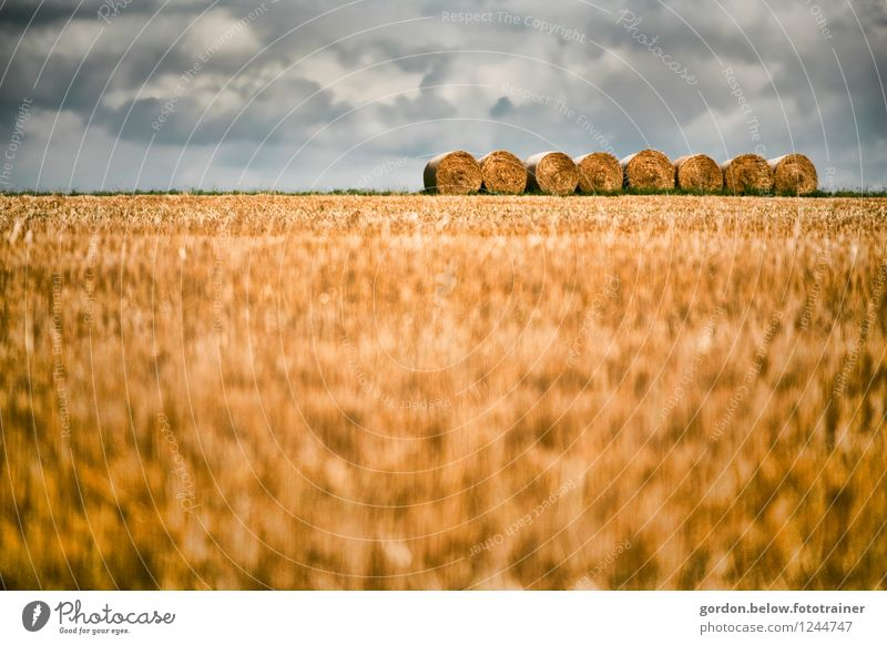Blue Summer Landscape Calm Clouds Yellow Arrangement Round Agriculture Grain Forestry Storm clouds Bale of straw Orderliness
