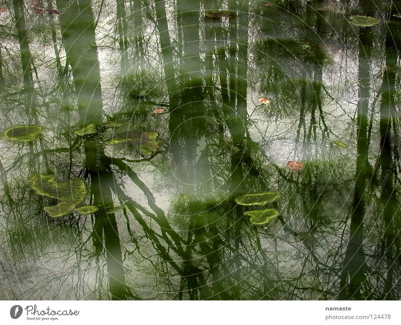 dream prince pond Pond Prince Charming Fairy tale Fog Tree Reflection Mystic Moody Dreary Water Summer Beautiful Putrefy Nature