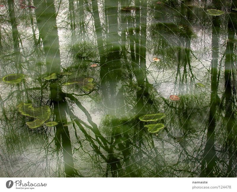 Nature Water Beautiful Tree Summer Moody Fog Putrefy Pond Mystic Fairy tale Dreary Prince Charming