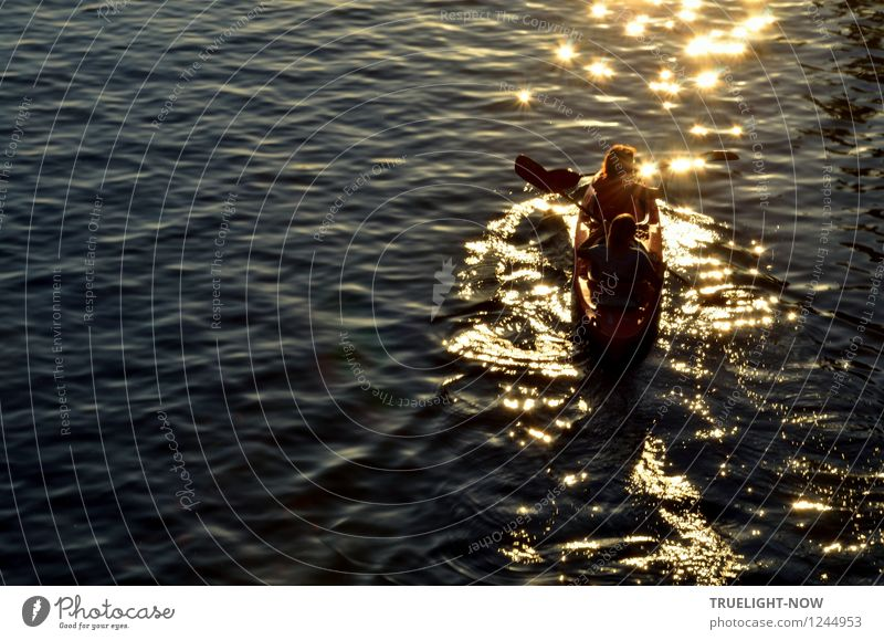 Paddling into the evening sun Joy Athletic Leisure and hobbies Vacation & Travel Trip Freedom Summer Sun Waves Sports Aquatics Rowboat Human being Masculine