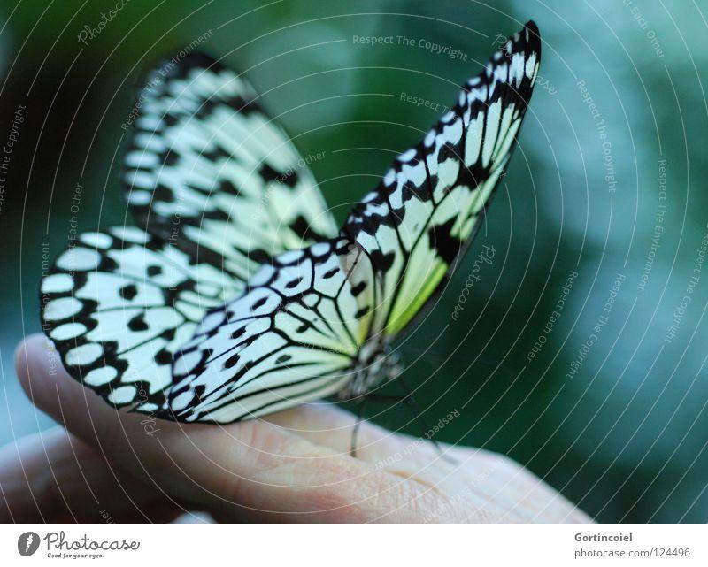 Human being Hand Nature White Green Beautiful Joy Flower Black Animal Yellow Colour Happy Legs Skin