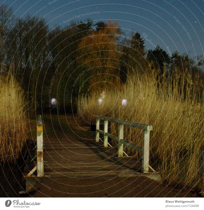 face2 Night Eerie Mystic Common Reed Dark Bridge Ghosts & Spectres  creepy Elms fire me