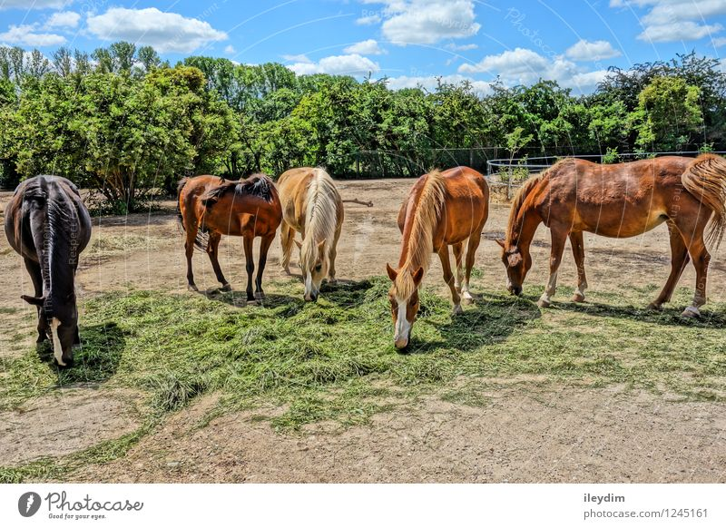 Group Horses Sky Clouds Summer Beautiful weather Animal Farm animal Wild animal Pelt Zoo Group of animals Herd Eating Feeding Together Blue Brown Multicoloured
