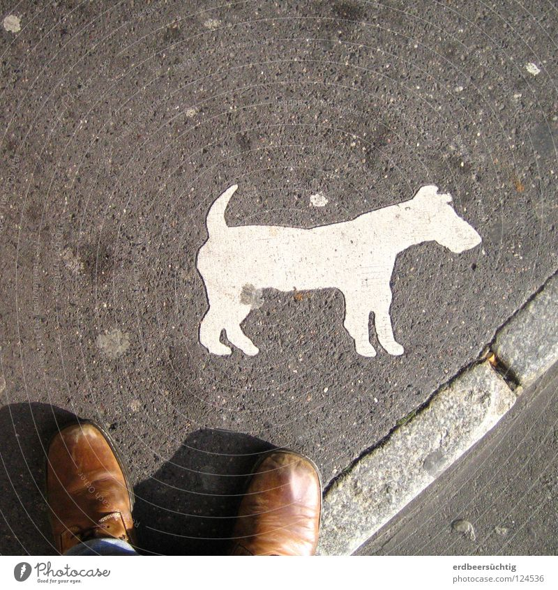 Warning of the dog... Dog Footwear Sidewalk France Absurd Laws and Regulations Services Traffic infrastructure Street Sign toe heap of dogs conventions