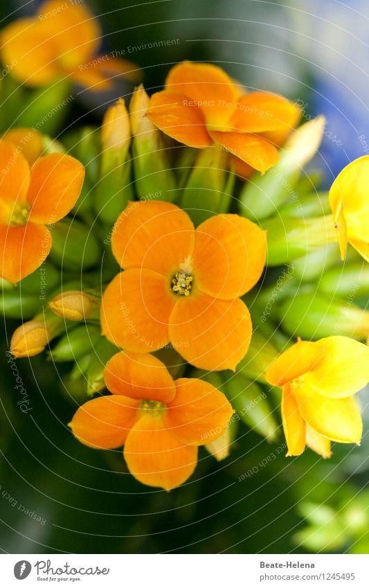 Nature Plant Green Beautiful Colour Yellow Blossom Illuminate Decoration Esthetic Blossoming Warm-heartedness Friendliness Bouquet Sunbathing Bud