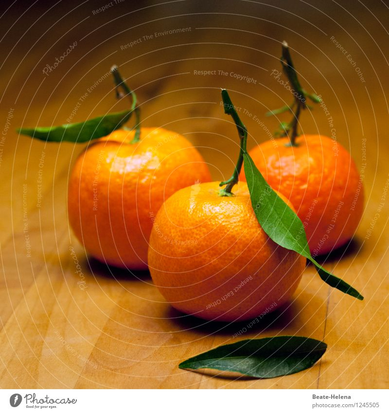 Nature Healthy Eating Food Fruit Orange Fresh Esthetic To enjoy Sweet Common cold Medication Organic produce Harvest