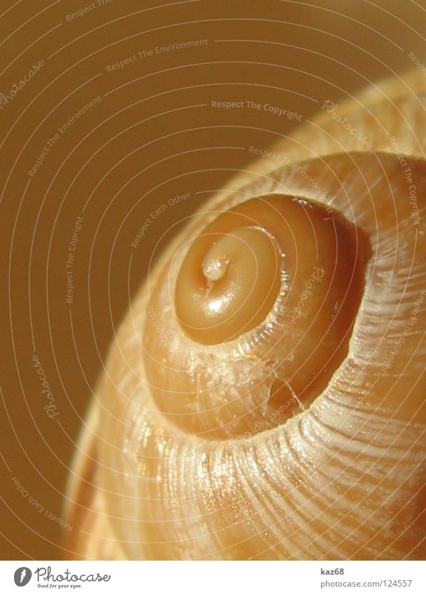 one-room apartment Beautiful Animal Snail Mussel Ornament Rotate Round Death Loneliness Snail shell Spiral Rotated Lime Discovery Hard Empty Rotation
