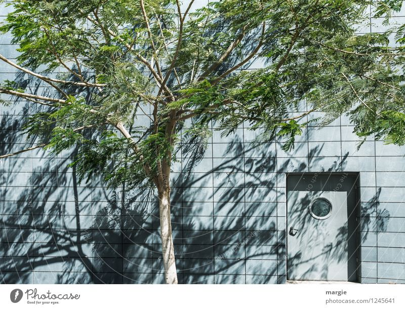 A mysterious door in a wall, in front of it a tree with shadow Nature Sun Beautiful weather Wind Plant Tree Leaf Foliage plant House (Residential Structure)