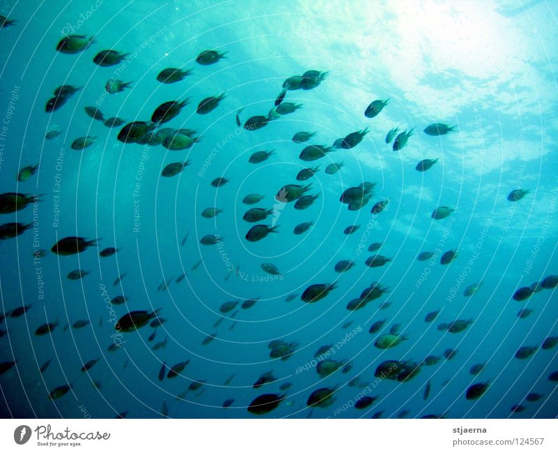 Water Underwater photo Ocean Green Blue Fish Dive Flock