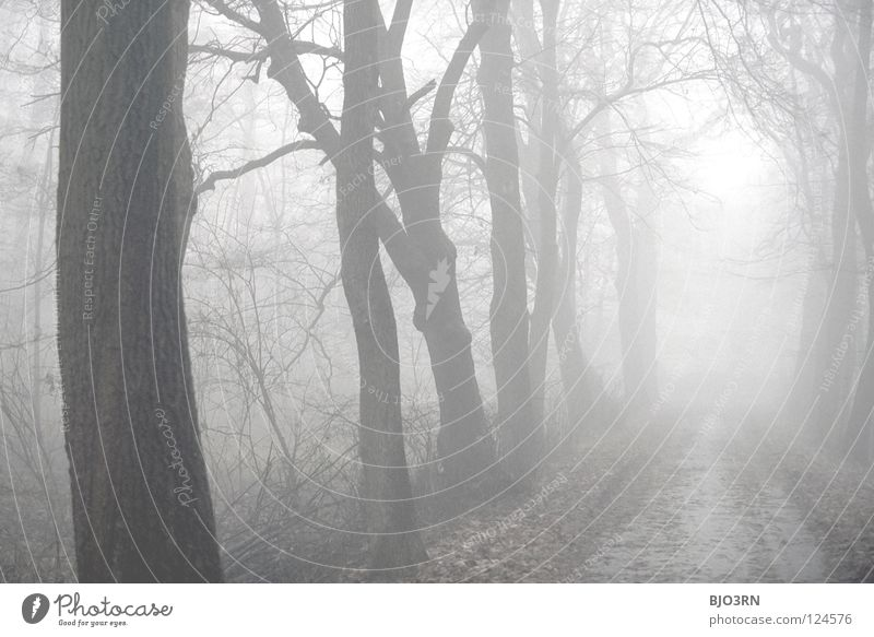 foggy woods #6 Fog Loneliness Cold Dark Tree Winter Forest Wet Damp Frozen Nature Misty atmosphere Ambiguous Mysterious Landscape format Horizontal trees baeme