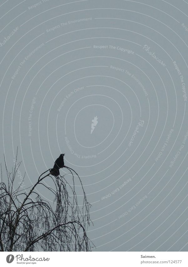 Nature Sky Tree Blue Calm Black Loneliness Relaxation Think Bird Boredom Slowly Crow