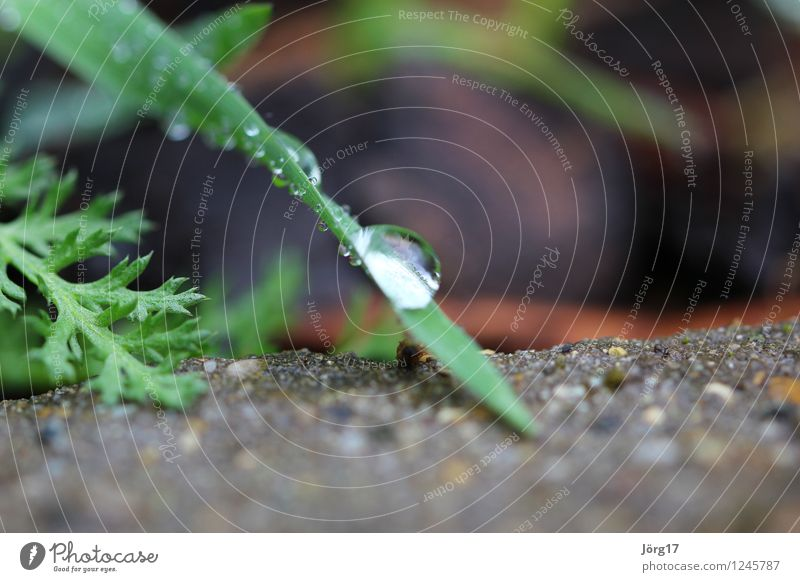 morning dew Nature Plant Animal Drops of water Grass Foliage plant Wild plant Garden Meadow Green Colour photo Exterior shot Close-up Detail