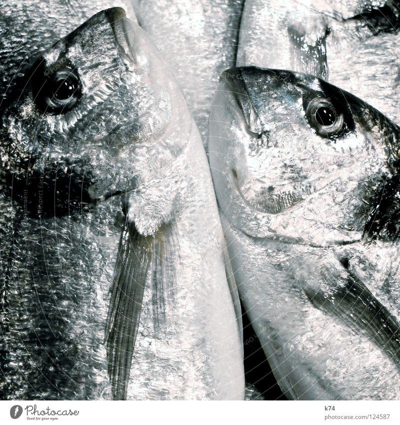 Ocean Glittering Nutrition Fish Cooking & Baking Mediterranean sea Silver Fishery Chrome Sushi Protein Fish dish Fish market Albumin Dorade