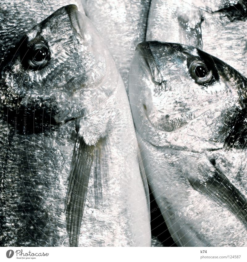 Ocean Glittering Nutrition Fish Cooking & Baking Mediterranean sea Silver Fishery Chrome Sushi Protein Fish dish Fish market Albumin Dorade