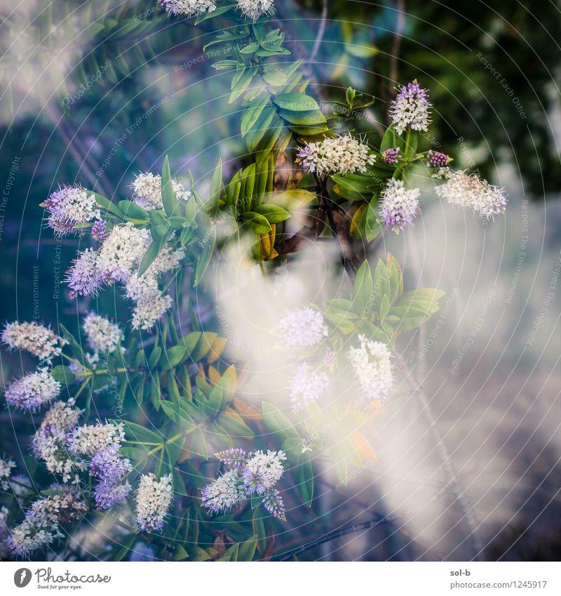 jstnghplntfrmlknggngn Sky Nature Plant Beautiful Summer Flower Clouds Environment Natural Healthy Garden Wild Fresh Elegant Glass Bushes