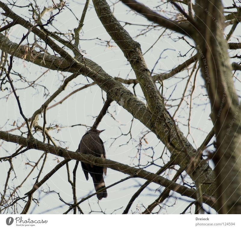 (K)a bird Bird Air Plumed Beak Dark Brown Animal Tree Bushes Leaf Treetop Sky Flying Feather Beautiful weather fair weather Blue Nature Landscape Branch Pole