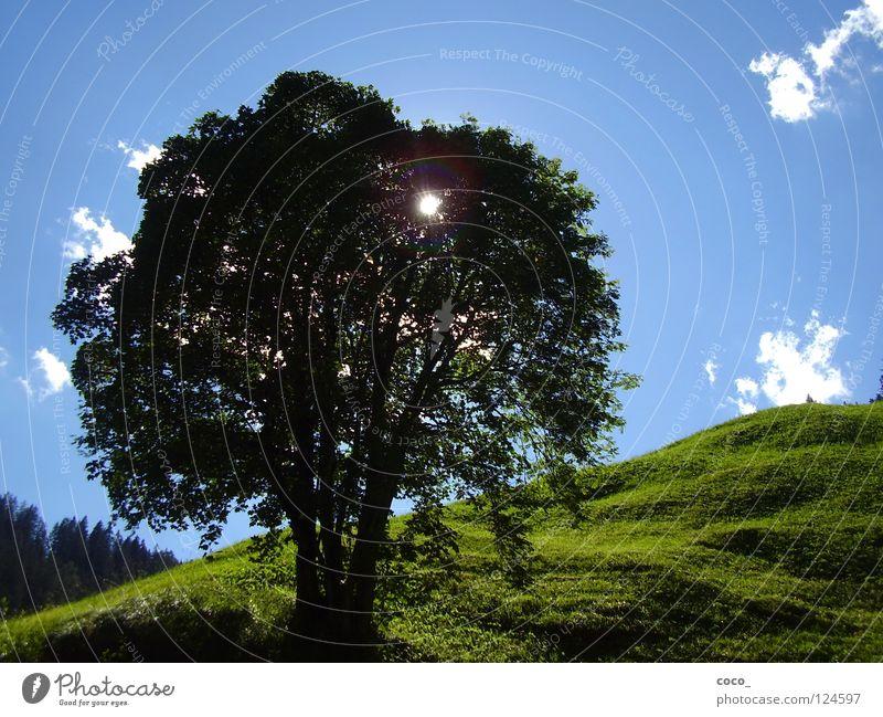 sun protection Switzerland Summer Meadow Tree Sun Mountain Safienthal