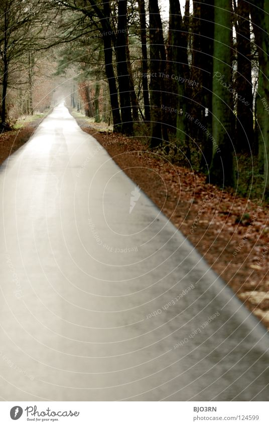 Winter Far-off places Autumn Lanes & trails Europe Gloomy To go for a walk Long Tunnel Pedestrian