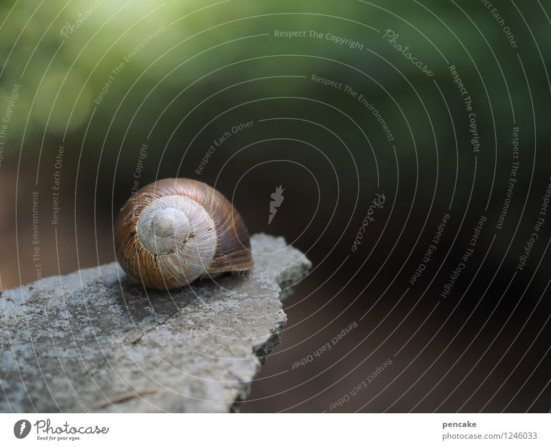stepping stone Forest Snail 1 Animal Stone Sign Breathe To hold on Crouch Wait Beautiful Feminine Relationship Dream Far-off places Wellness Vineyard snail