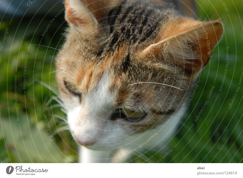 cat Animal Cat Domestic cat Feed To feed Barn fowl Watchfulness Testing & Control Hunter Hunting Warped Fear Playing Mammal Sacrifice Food Caution akai jörg