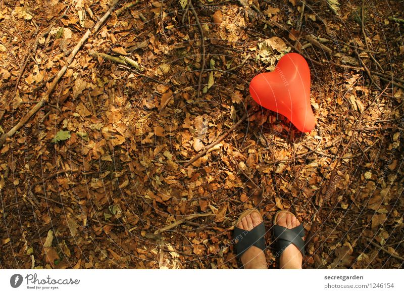 Human being Woman Nature Summer Red Loneliness Leaf Forest Adults Love Happy Brown Feet Friendship Park Heart