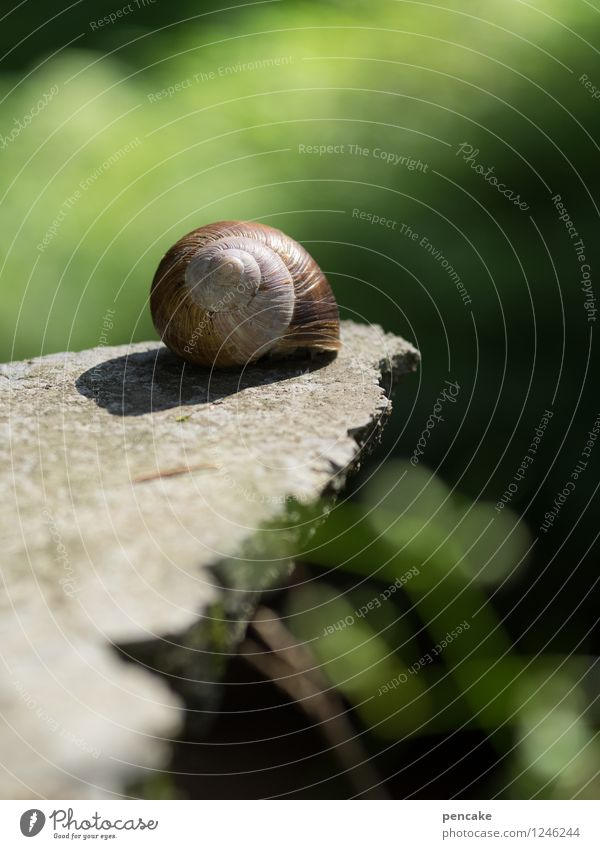 sun deck Snail Sign Relaxation To enjoy Lie Beautiful Feminine Wellness Vineyard snail Blur Forest Clearing Stone Stone slab Sunbathing Colour photo