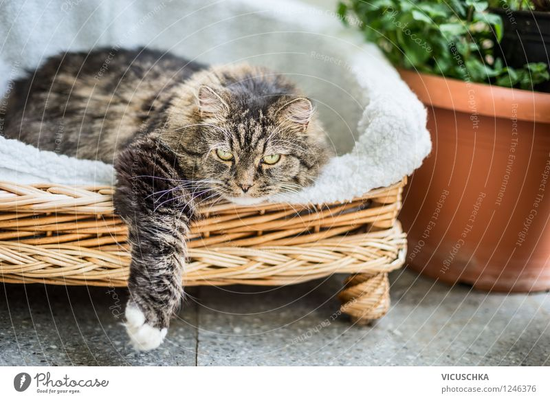 Cat lies in basket on garden terrace Design Leisure and hobbies Summer House (Residential Structure) Garden Sofa Shows Nature Spring Beautiful weather Plant