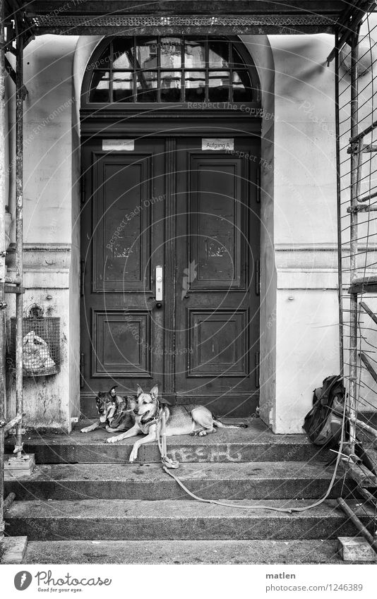 750 Town Deserted House (Residential Structure) Gate Wall (barrier) Wall (building) Facade Door Animal Pet Dog 2 Black White Self-confident Shepherd dog