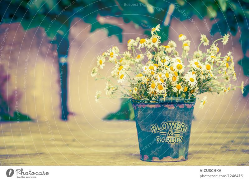 Old bucket with camomile bunch of flowers Style Design Relaxation Summer Garden Decoration Table Nature Plant Flower Leaf Blossom Wild plant Wall (barrier)